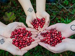 Kızılcıktaki Vitaminler Hangileri? Kızılcığın Faydaları Neler?